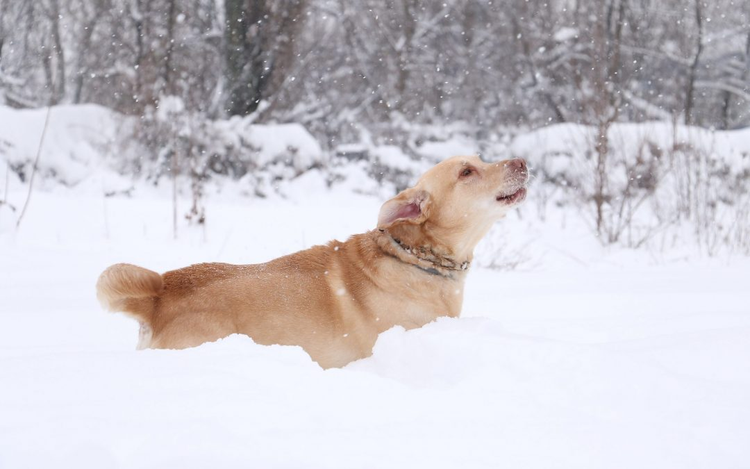 Walking Your Dog in Winter: What You Need to Know