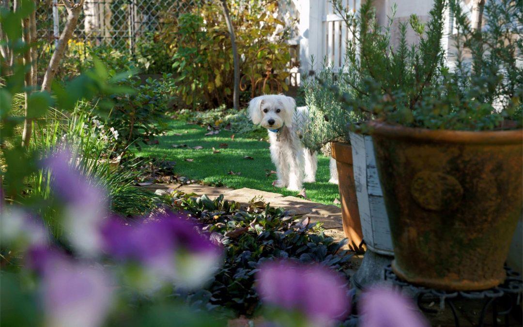 Creating a Pet-Safe Garden