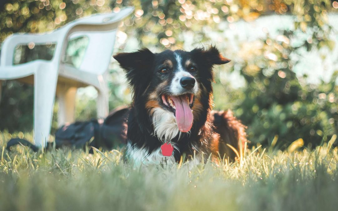 Caring for dogs in the summer heat
