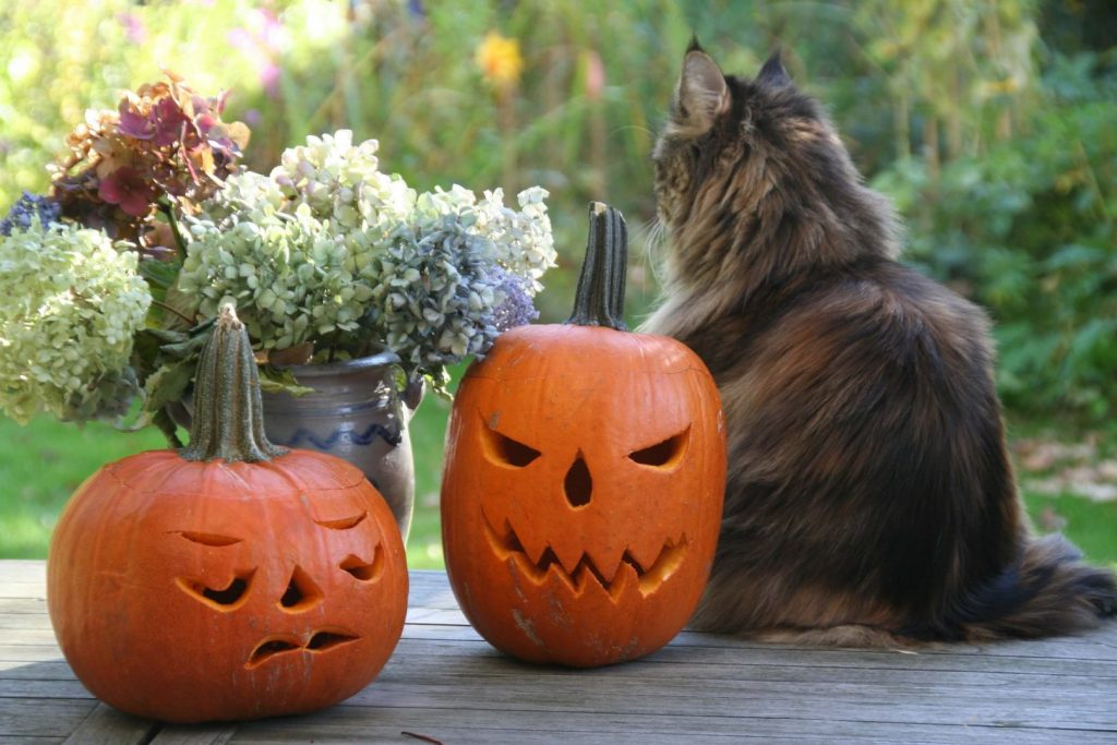 Keeping your pets happy on Halloween